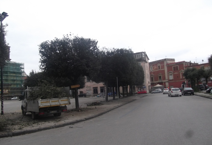 Aversa - Piazza Marconi potatura 1