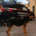 carabinieri cani droga