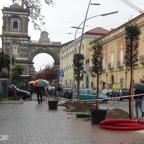 Aversa – Alberi in Via Di Jasi (3)
