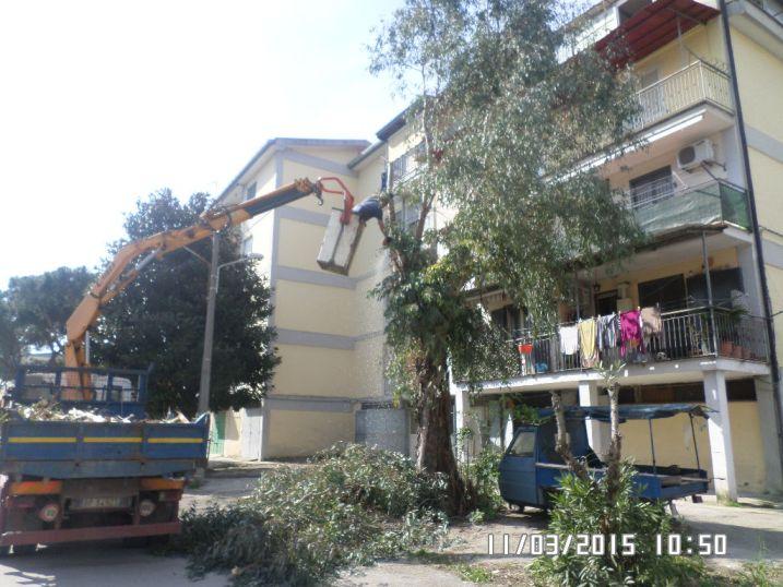 Aversa – Potatura alberi in zona Iacp
