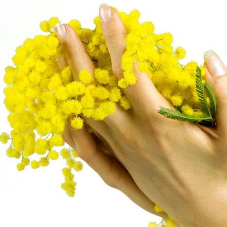 Festa della Donna – mimose