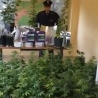 Palermo – marijuana allo Zen