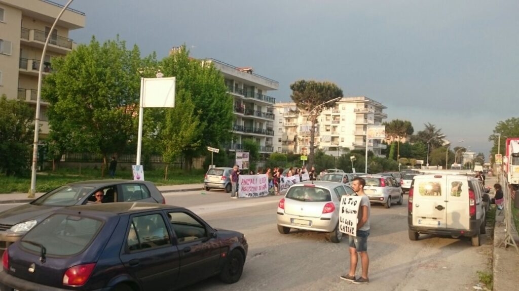 Aversa – protesta animalisti (4)