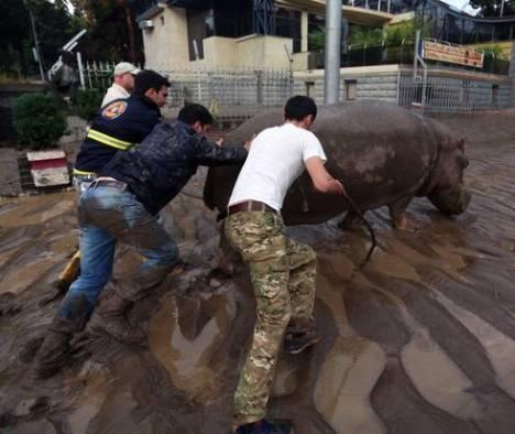 georgia inondazione