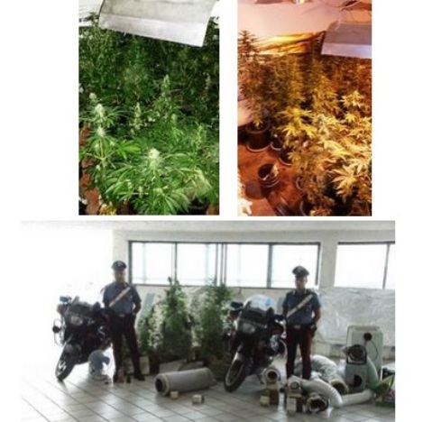 marijuana mondragone1