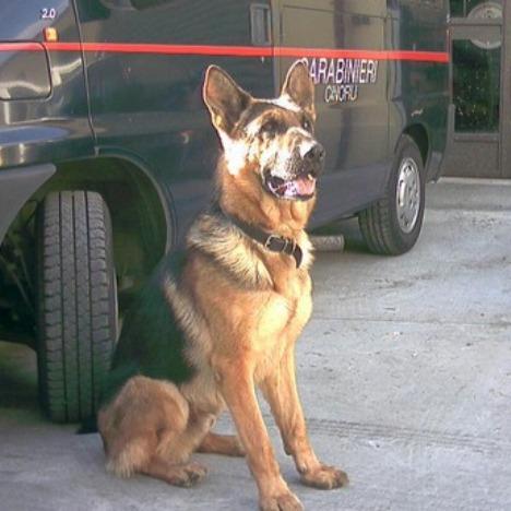 carabinieri-cane