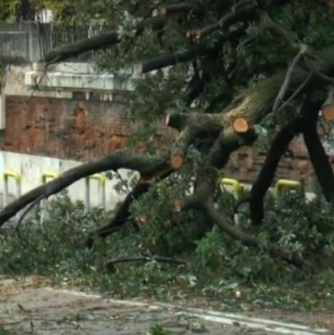 albero crollato
