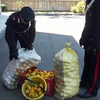 limoni furto