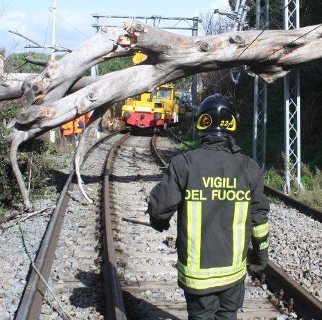 roma frascati albero treno (2)