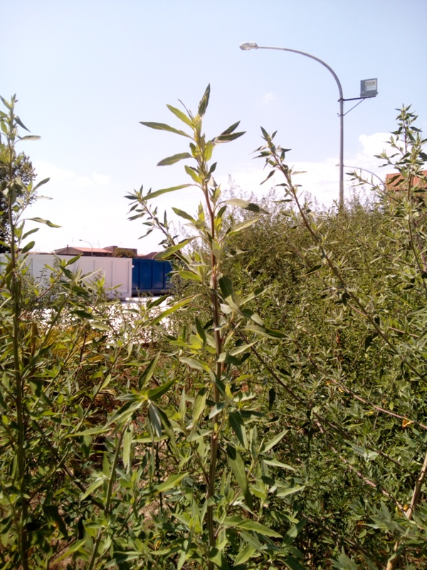 cesa isola ecologica (3)