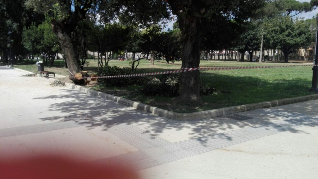 parco pozzi piante (2)