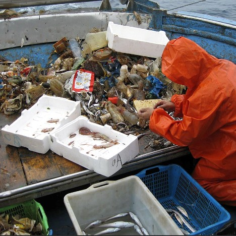 pesce e plastica
