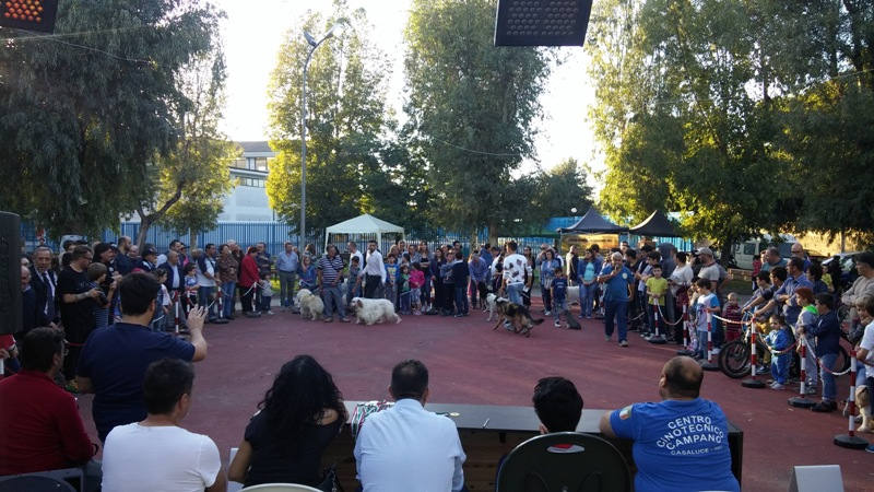 lusciano cani (6)