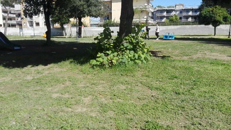 parco pozzi degrado (14)