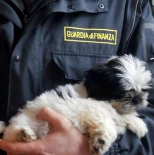 cani cuccioli (2)