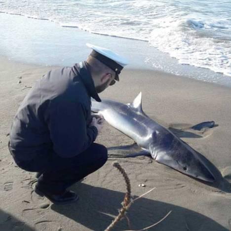squalo-ostia