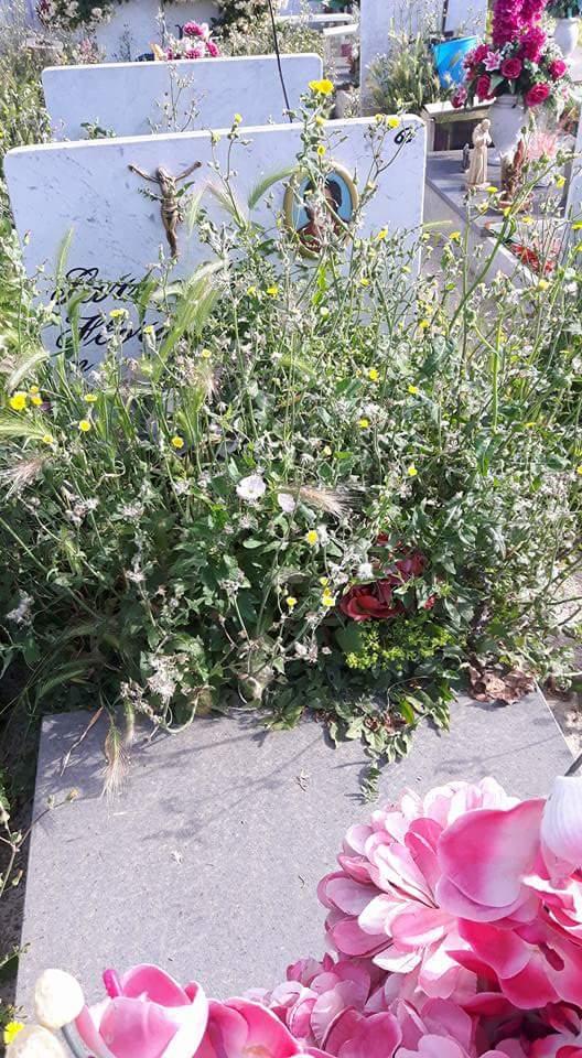 cimitero aversa erbacce (1)