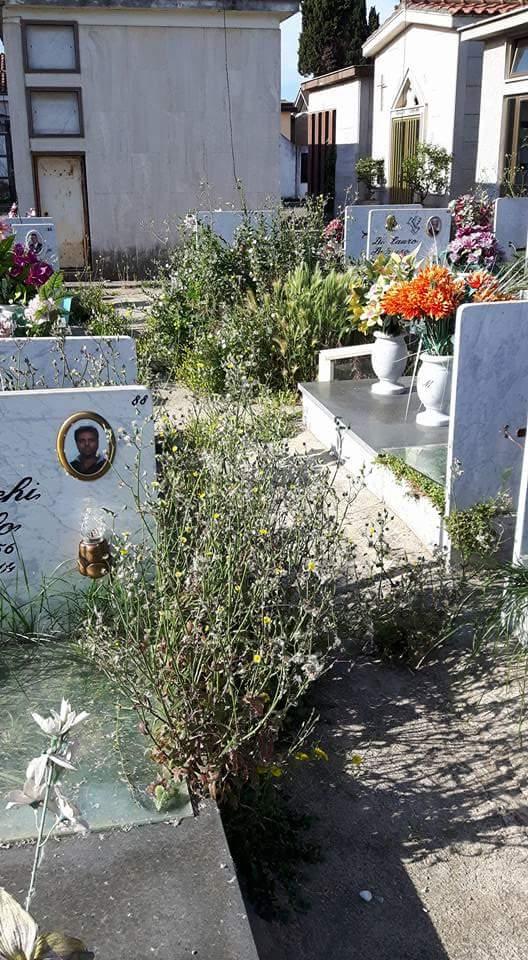 cimitero aversa erbacce (6)