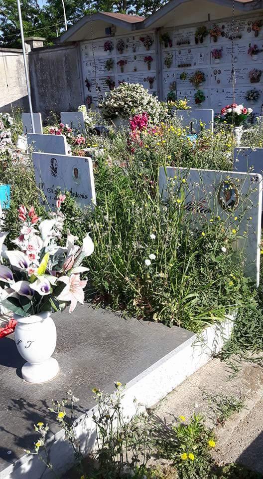 cimitero aversa erbacce (7)