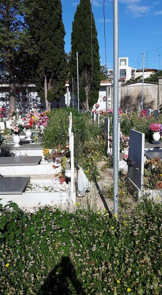 cimitero aversa erbacce (8)