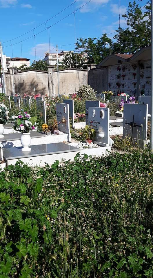 cimitero aversa erbacce (9)