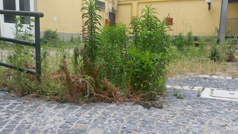 Cultura: Capitale italiana 2020, sei città siciliane candidate