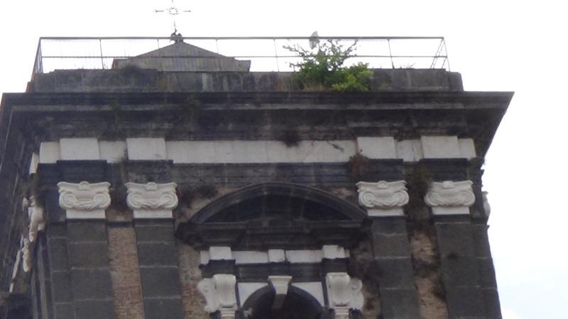 erbacce sul campanile di Porta Napoli