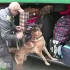 cane droga bagagli bus