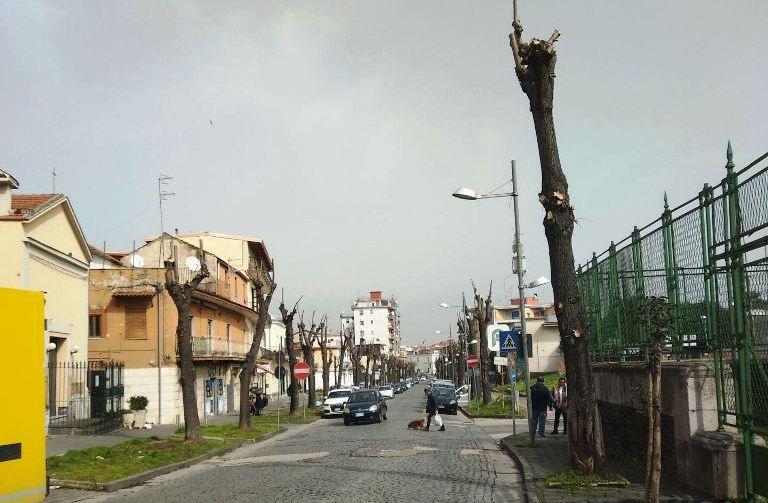aversa alberi (1)