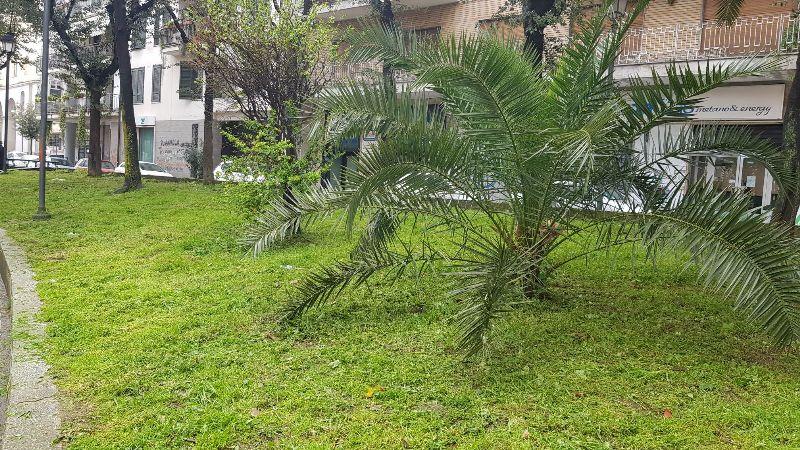 aversa verde (6)