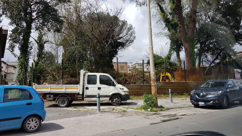 aversa alberi (3)