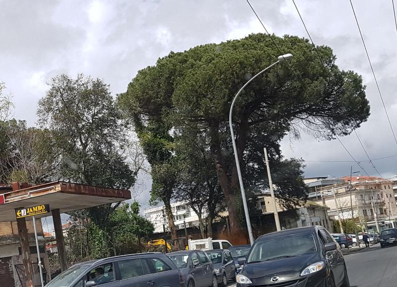 aversa alberi (5)