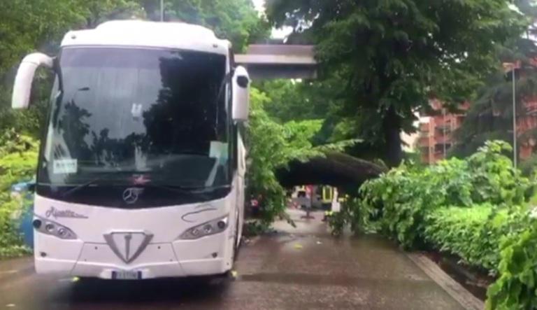 albero autobus
