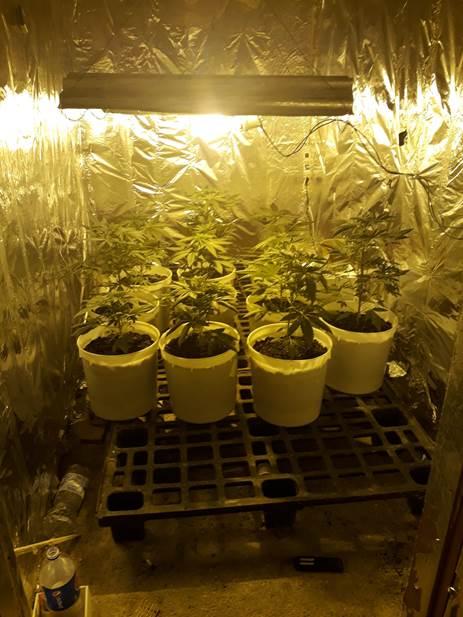 marijuana frignano (3)
