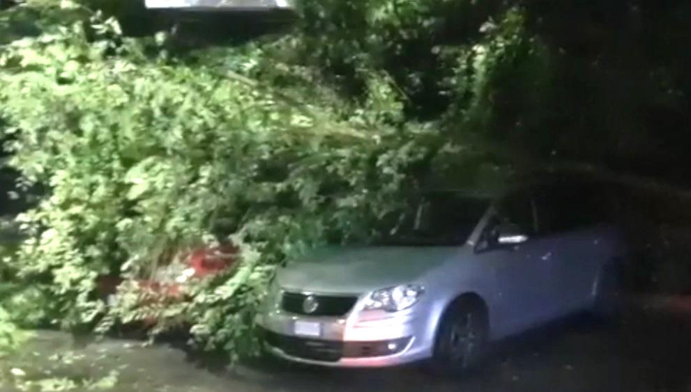 albero crollato auto