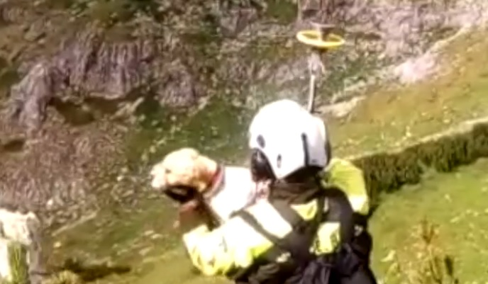 cane salvataggio