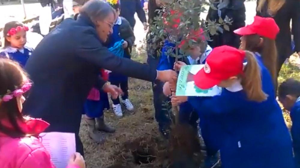 festa albero aversa 23
