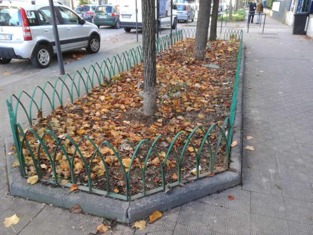 foglie aversa (1)