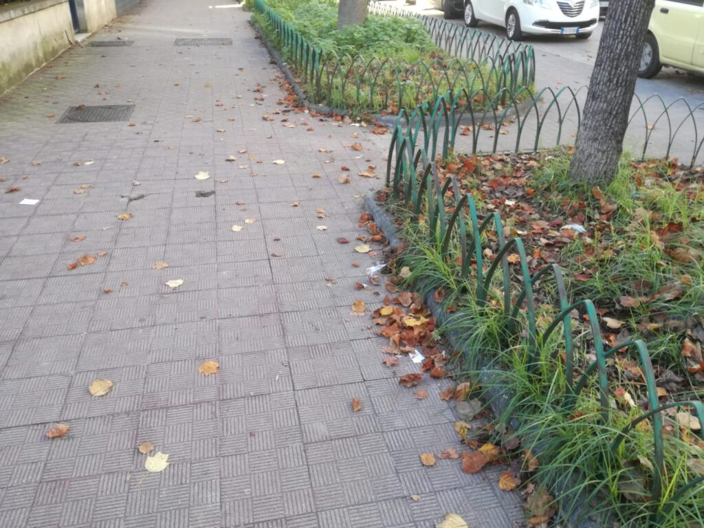 foglie aversa (2)