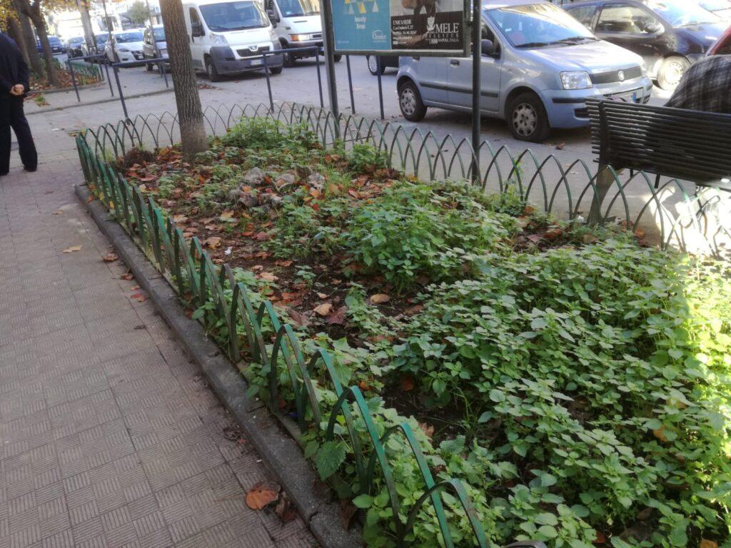 foglie aversa (3)