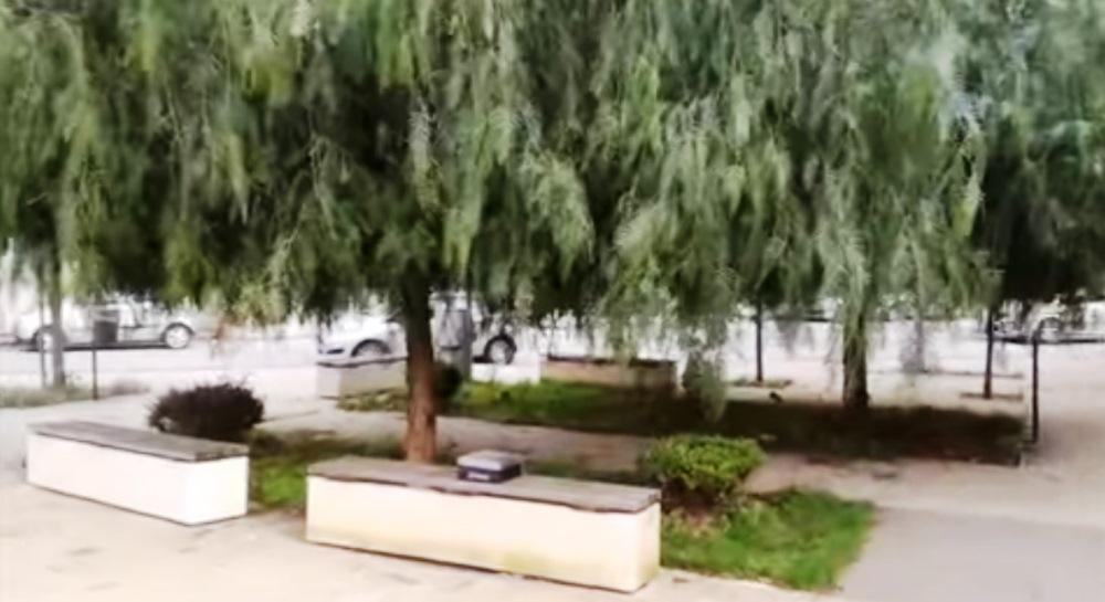 piazza crispi piante