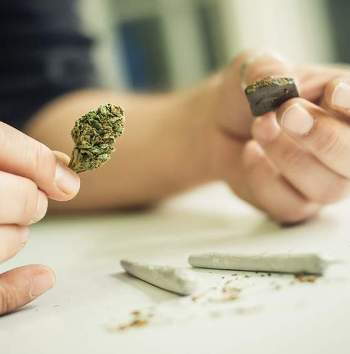 hashish marijuana