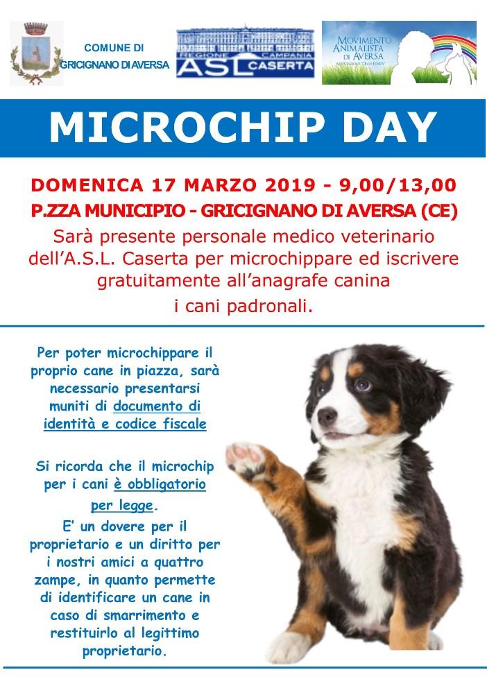 A3 microchip day gricignano 17_03_2019