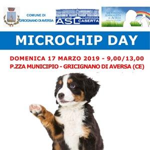 microchip gricignano2
