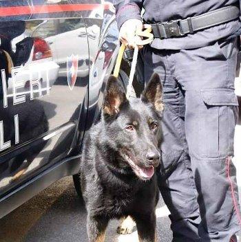Nepal-cane-carabinieri