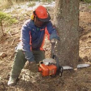 taglio albero