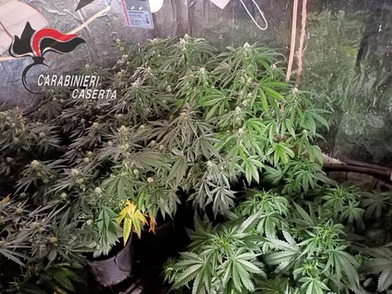 cervino marijuana2