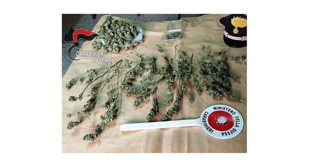 marijuana aversa