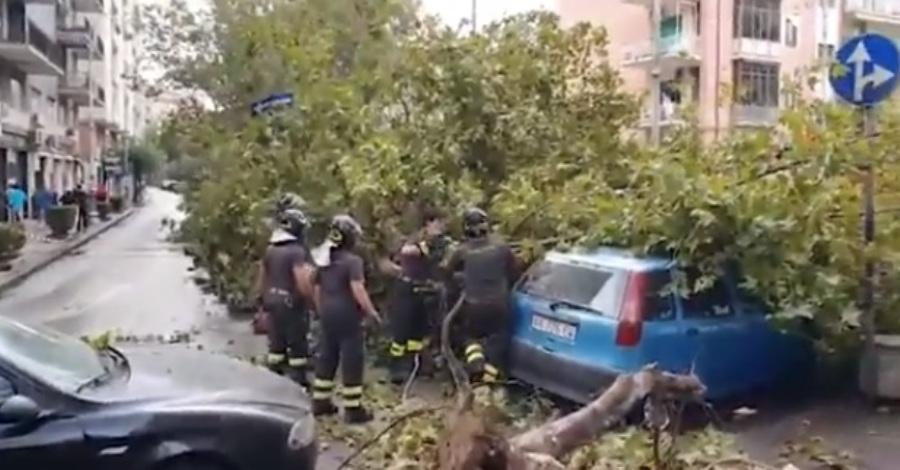 salerno alberi