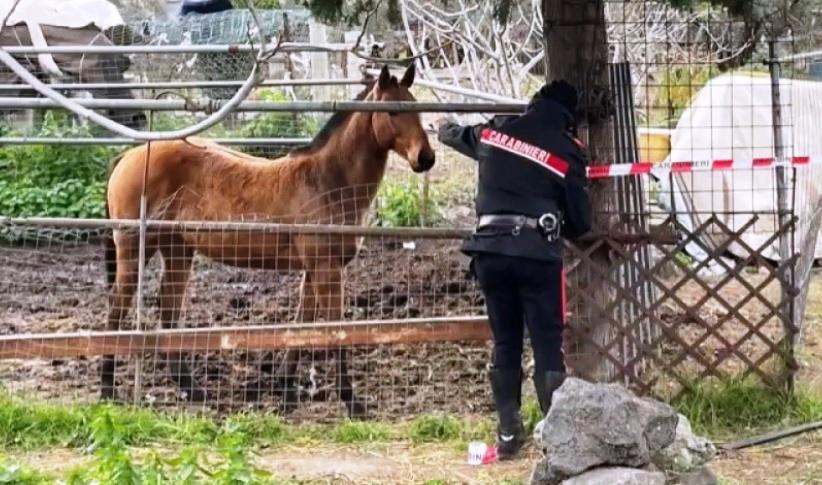 carabinieri cavall